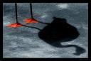 flamingo-shadow-by-nightjar